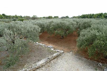 Apartamenty sarenko winorośli oliwy-04