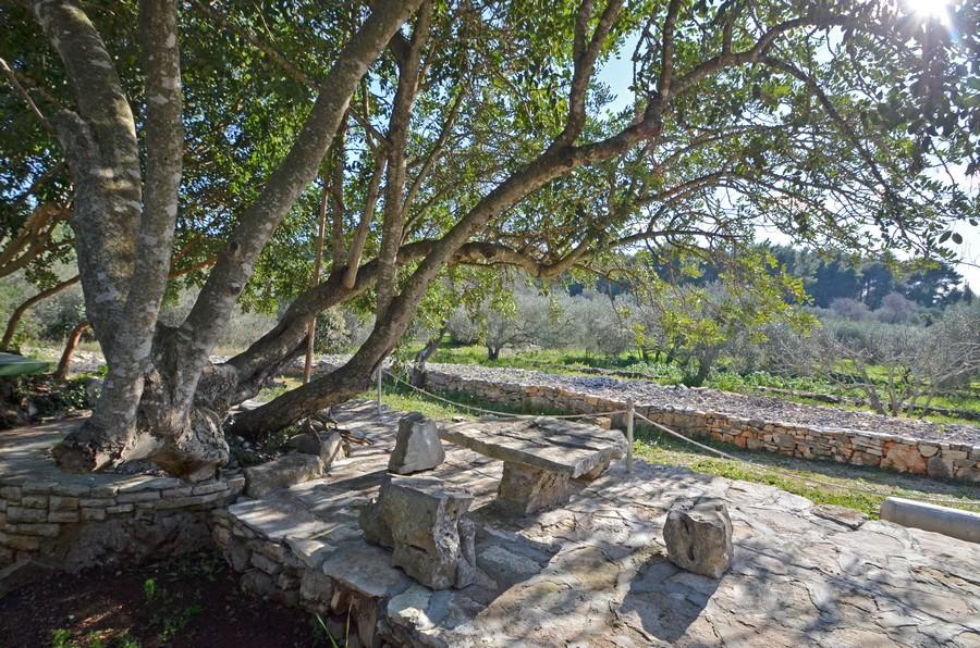 Korcula-Holiday-House-Vela-Luka-orebs-Cottage-House-13