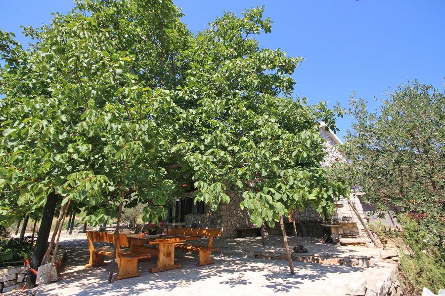 Villa katja-dvorište-stabla 21