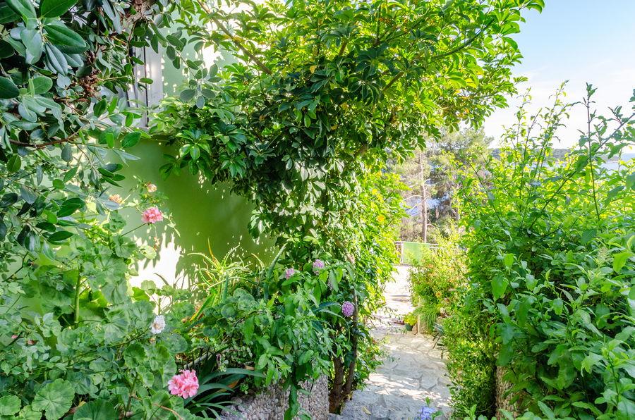 Korcula-prizba apartamenty tatjana-house-06-2019-pic-01