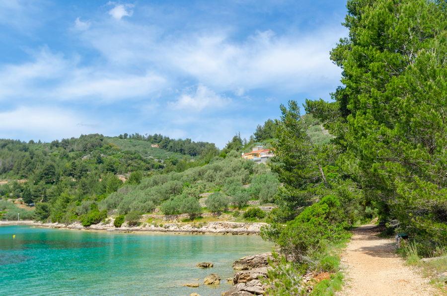 Vela-Luka-Villa-Nina-Beach-surrounding-04
