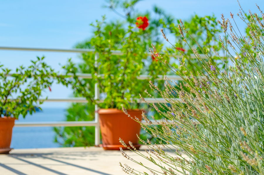 Korcula-Prizba-Apartments-Danko-House-Flowers-09-2018-slika-05