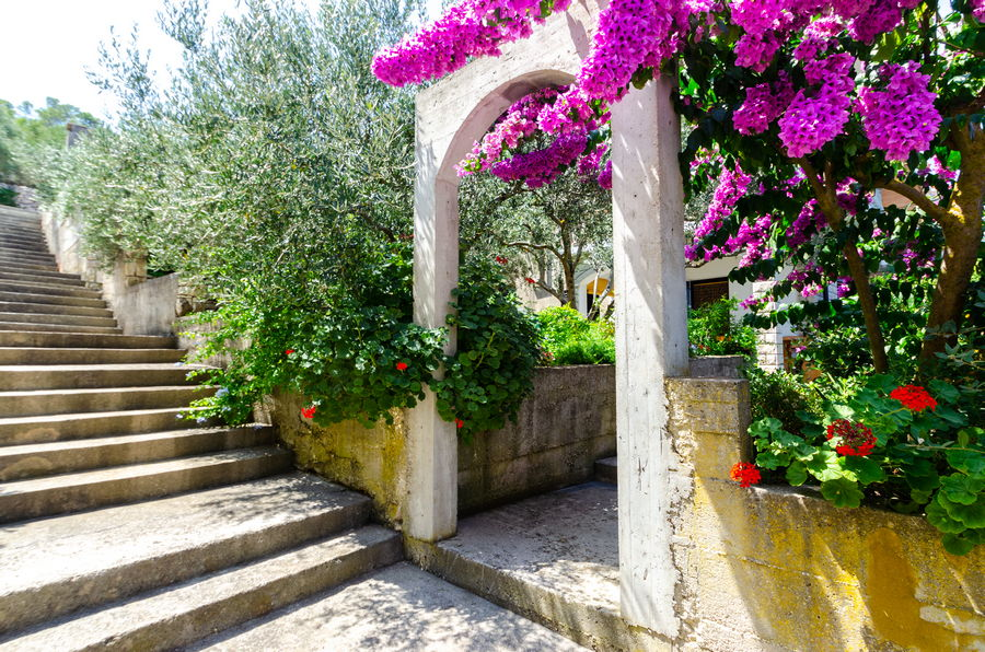 korcula-prigradica-apartments-vlajna-house-garden-entrance-08-2019-PIC-07