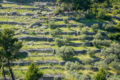 dry-stone-walls-things-to-do-korcula-01