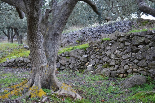dry-stone-walls-things-to-do-korcula-04